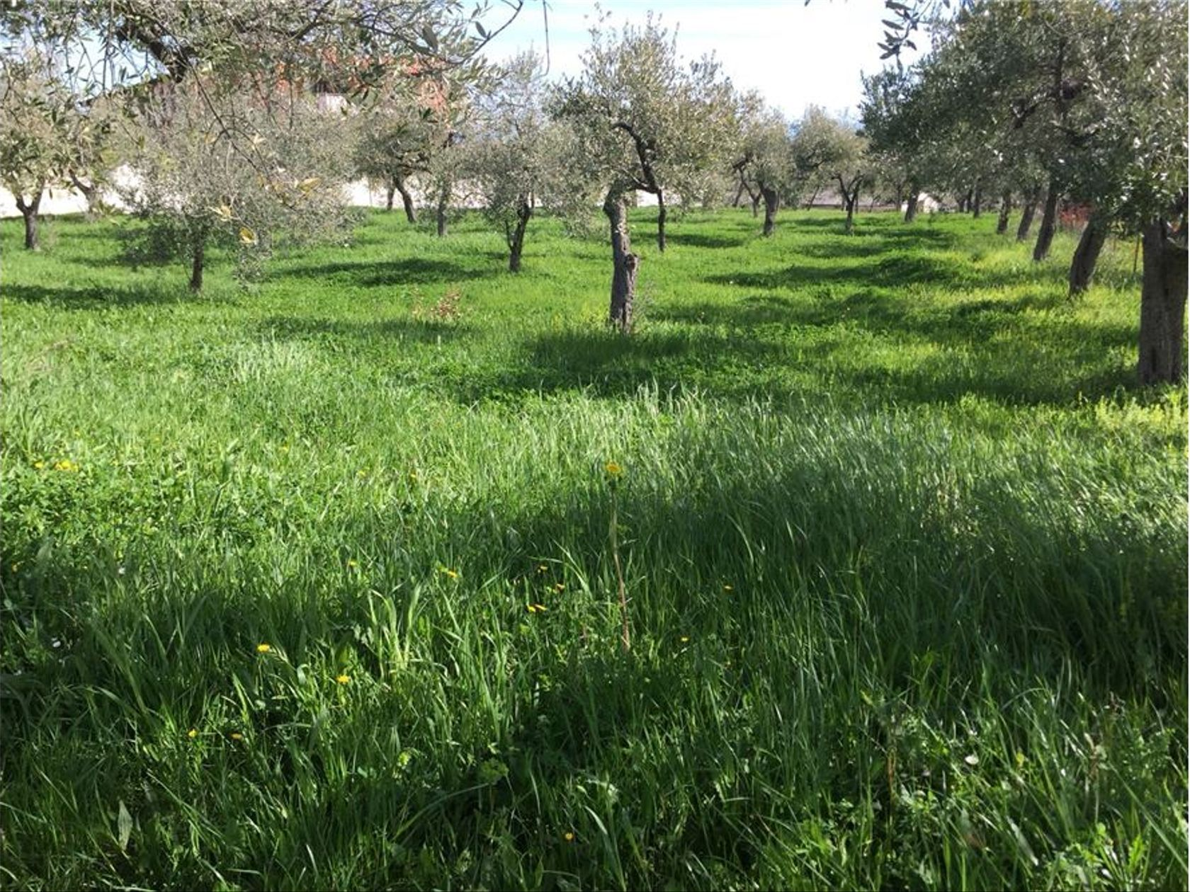 Terreno Edificabile Lanciano, CH Vendita - Foto 11