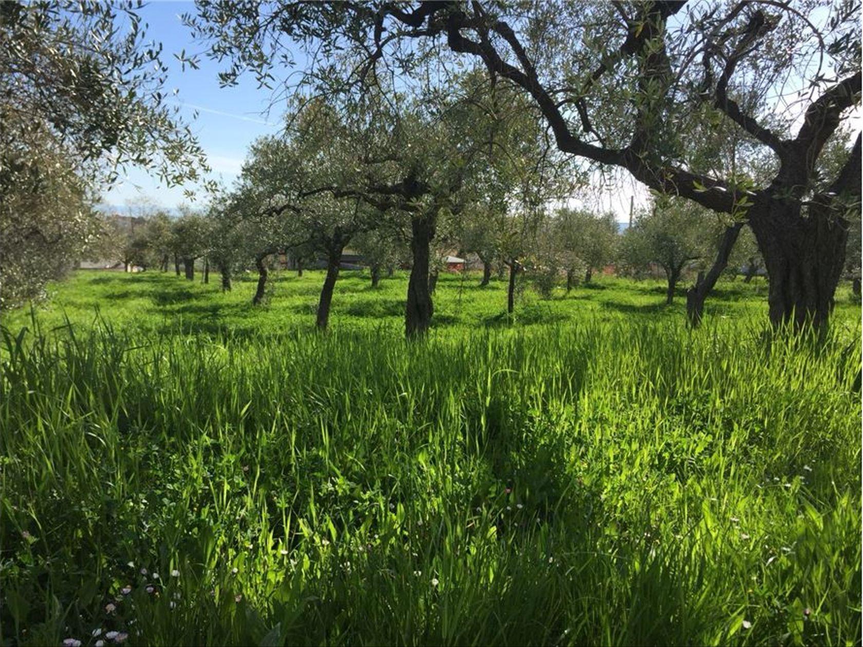 Terreno Edificabile Lanciano, CH Vendita - Foto 9