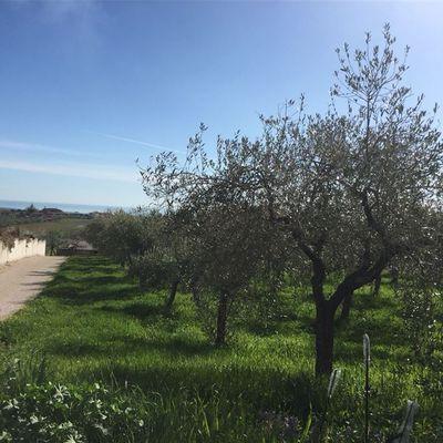 Terreno Edificabile Lanciano, CH Vendita - Foto 6
