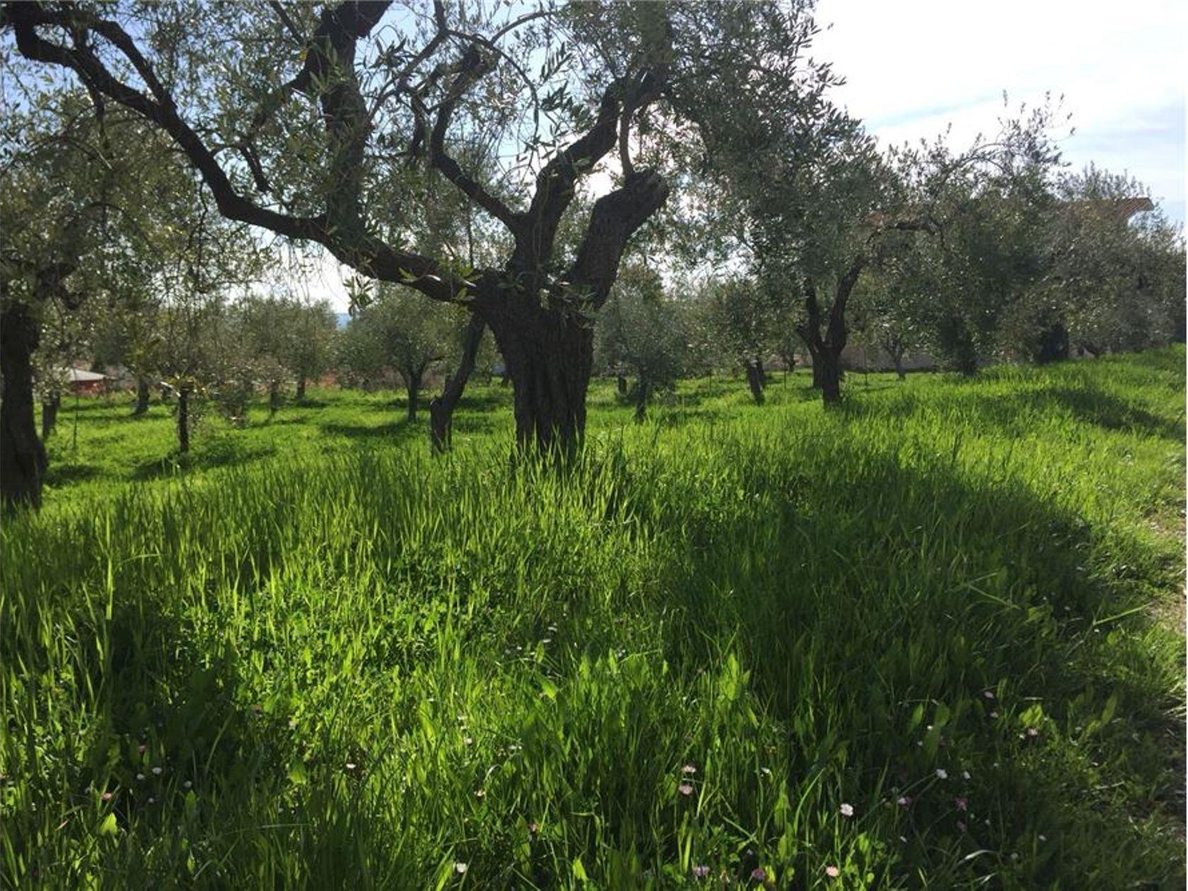 Terreno Edificabile Lanciano, CH Vendita - Foto 8