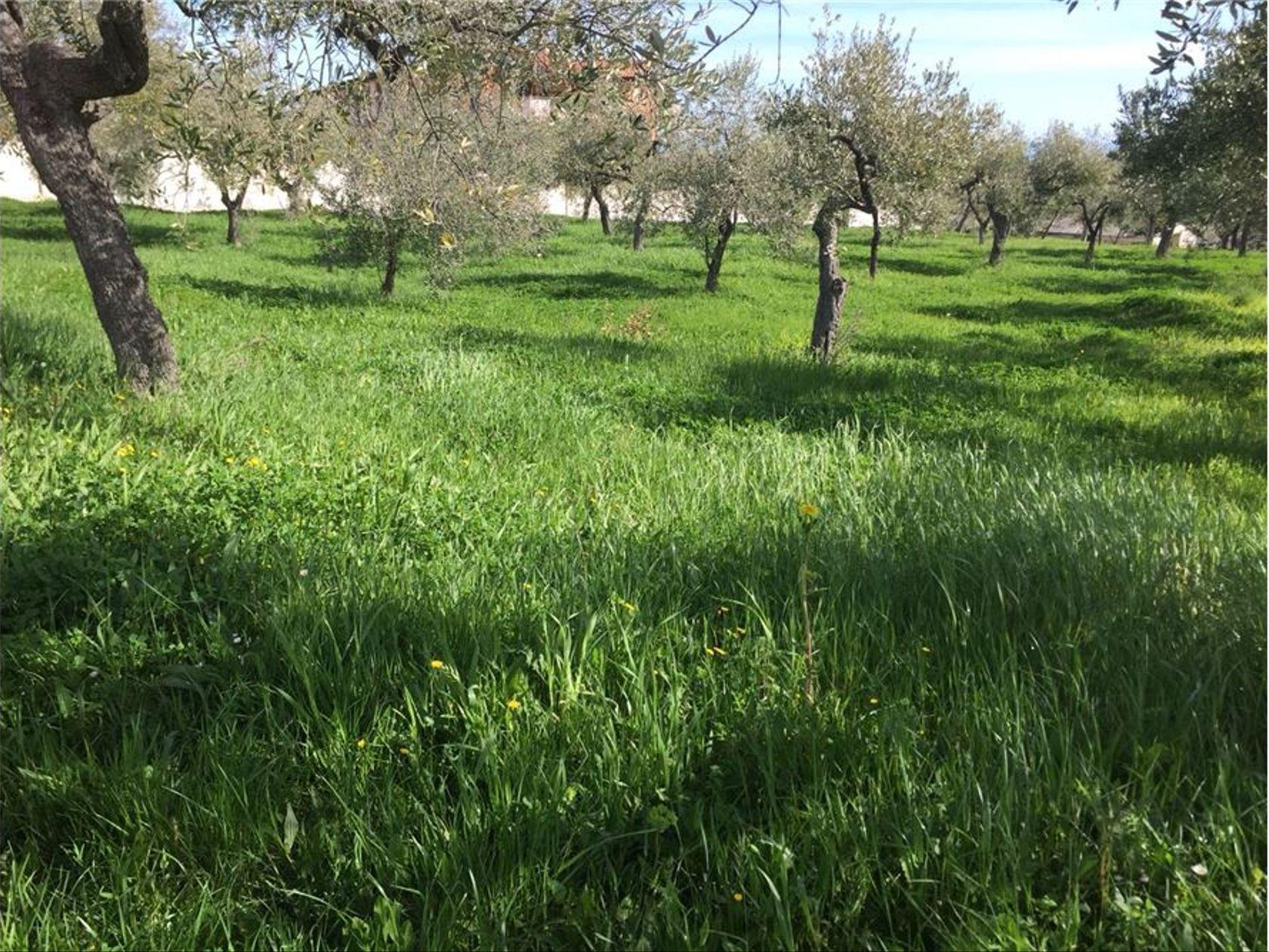 Terreno Edificabile Lanciano, CH Vendita - Foto 10